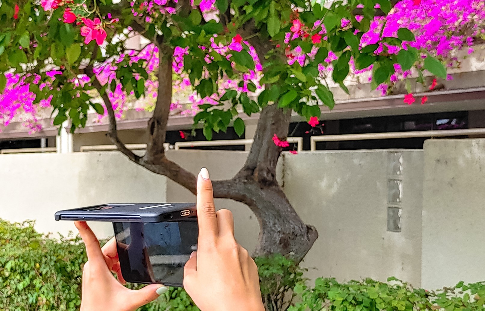 A woman holds up her LG G8X ThinQ in two hands while using the smartphone's second screen to preview her photo of purple flowers at a tilted angle.
