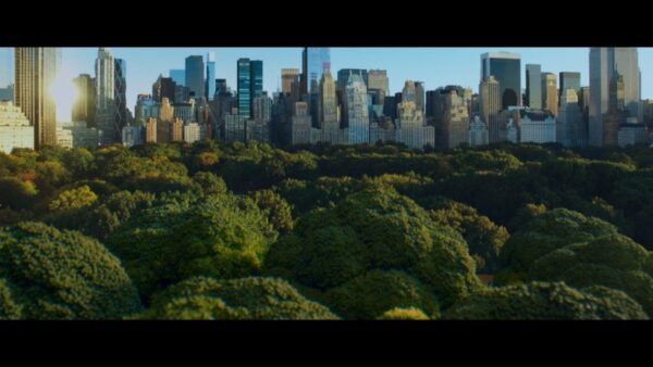 The green trees of New York City's Central Park with its many tall skyscrapers in the background.